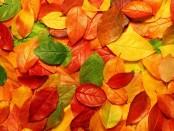 hd-herfst-wallpaper-met-gekleurde-herfstbladeren-op-de-grond-herfst-achtergrond-foto